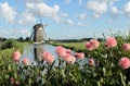 Windmill and flowers in holland landscape with a pink dahlia a canal Royalty Free Stock Photos