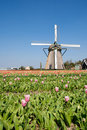 Windmill & tulips Royalty Free Stock Photos