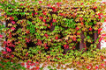 Window autumn clambering plant Stock Photo