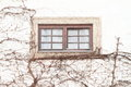 Window With Bougainvillea