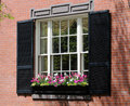 Window Box in Boston Royalty Free Stock Photos