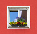 Window with box of different colorful flowers Royalty Free Stock Photo