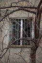Window with broken glass and tree with bare branches