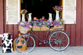 Window Decorated with Flowers in jugs and nice bicycle Royalty Free Stock Photo