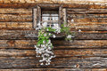 Window and flowers on the wooden wall of the hut Stock Image