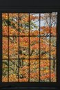 Window frame filled with red maple leaves Royalty Free Stock Photo