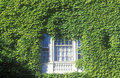 Window framed by ivy, Stock Photos