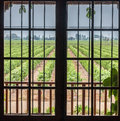 Window framing vineyard colchagua valley chile Royalty Free Stock Photography