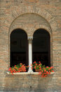 Window geraniums