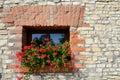 Window with geraniums