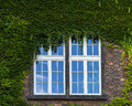 Window and grapevine in building on wawel castle in krakow poland Royalty Free Stock Photos