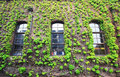 Window with ivy Royalty Free Stock Photo