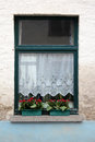 Window with lace curtains and flowers a detailed a row of Royalty Free Stock Photo