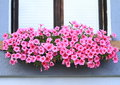 Window with lila flowers in front of wooden Stock Photography