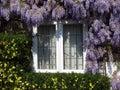 Window with lilac