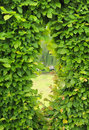 Window made from cut of garden bush in sunny day Stock Images