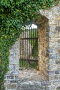 Window in medieval stronghold covered with creeping plants old bar montenegro Stock Photos