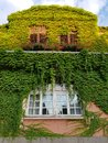 Window of an old house with ivy on the wall in Oradea, Romania