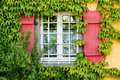 Window old in a house with vines Royalty Free Stock Images