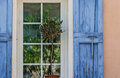Window olive plant in front of with blue shutters and reflections of green trees in the panes Stock Photography
