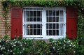 A window with opened shutters on ivy wall