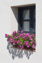 Window with petunias Stock Image