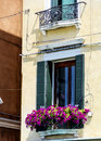 Window with pink blooming petunia flowers  in Venezia Royalty Free Stock Photo