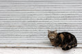 A window sill cat sitting on Royalty Free Stock Photos