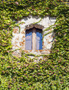 Window surrounded by leaves in stone wall it s a vertical picture Stock Photo