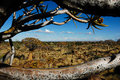 Window to the Quiver tree forest (Namibia) Royalty Free Stock Image