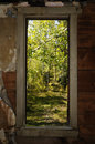 Window of trees Royalty Free Stock Photo