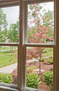 Window View of Front Yard Royalty Free Stock Image