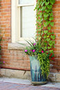 Window with Vines Stock Photography