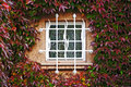 Window in a wall perfectly covered by Boston ivy Royalty Free Stock Photos