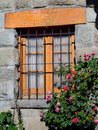 Windows blumen Stockbilder
