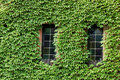 Windows covered with green Stock Photos