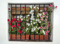 Windows with flowers located in the spanish village of pampaneira in a sunny day Stock Photography