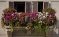 Windows framed by colorful flowers in piazza in Rome, Italy Royalty Free Stock Images