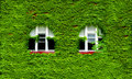 Windows and Green Ivy Royalty Free Stock Photo