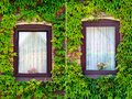Windows with ivy, set of two Royalty Free Stock Photography