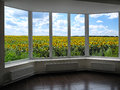 Windows overlooking the field of sunflowers room with metal plastic Stock Image