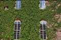 Windows of the royal palace in stockholm ivy Stock Photography