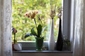 On the windowsill orchids and decorative vases a Stock Photography