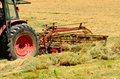 Windrow rake agriculture tractor pulling a rotory bar tine through a field of cut grass hay to for the baler for winter livestock Royalty Free Stock Image