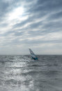 Windsurfer on north sea coast of germany at afternoon Stock Photography