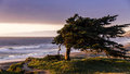 Windswept cypress tree along the northern California coast Royalty Free Stock Photo