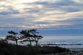 Windswept Trees Silhouetted Against a Cloudy Sunset at the Beach Royalty Free Stock Photo