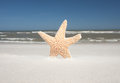 Windy Day With Starfish At The Beach Royalty Free Stock Photography
