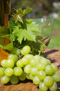Wine is an alcoholic beverage made from fermented grapes or other fruits the natural chemical balance of grapes lets them ferment Stock Images