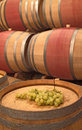 Wine barrels and wine grapes an image from a winery cellar Stock Photography